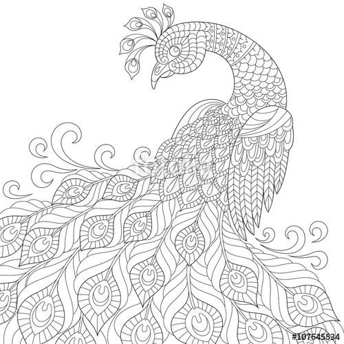500x500 Decorative Peacock. Adult Anti Stress Coloring Page. Black