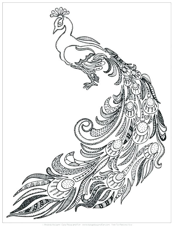 590x772 Peacock Feather Coloring Page Peacock Feather Coloring Page Grown