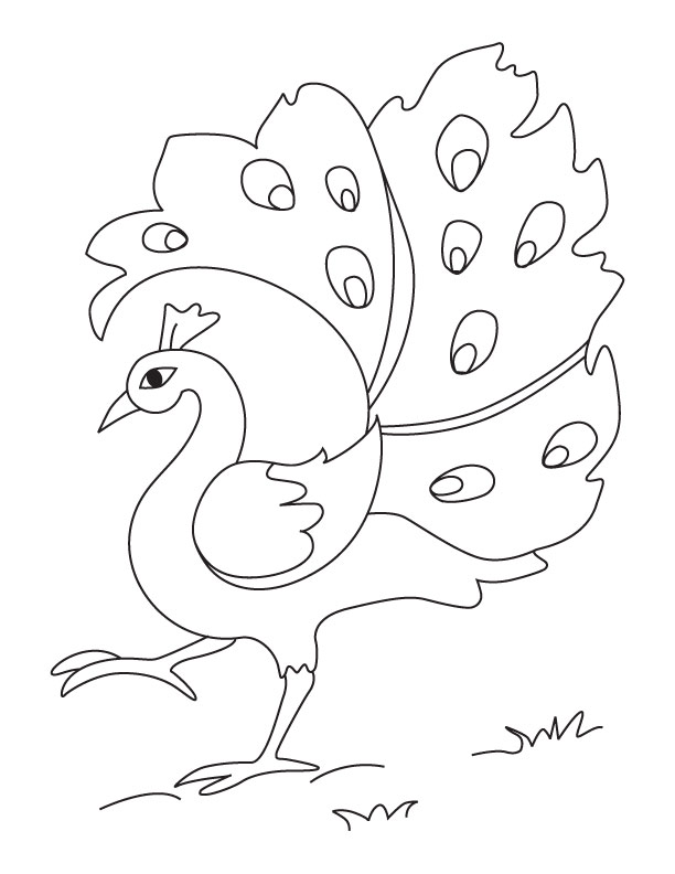 612x792 Baby Peacock Coloring Pages 54 Best Images