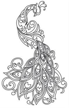 Peacock Outline Drawing