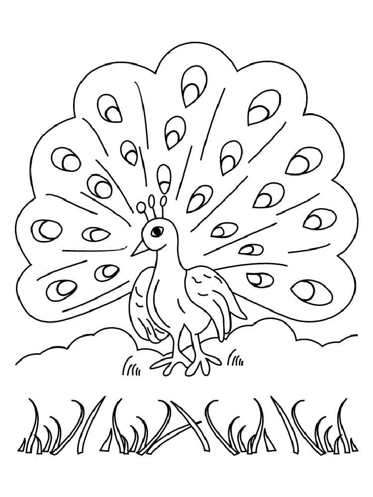 750x1000 Peacock Coloring Pages On Tree Branch