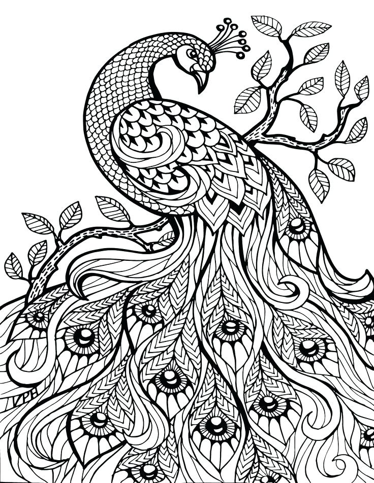 736x952 Classy Coloring Pages Peacock Online Advanced Colouring Page