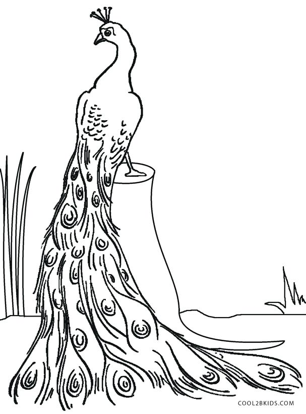 607x820 Peacock Color Page Pin Drawn Peacock Female Detailed Peacock