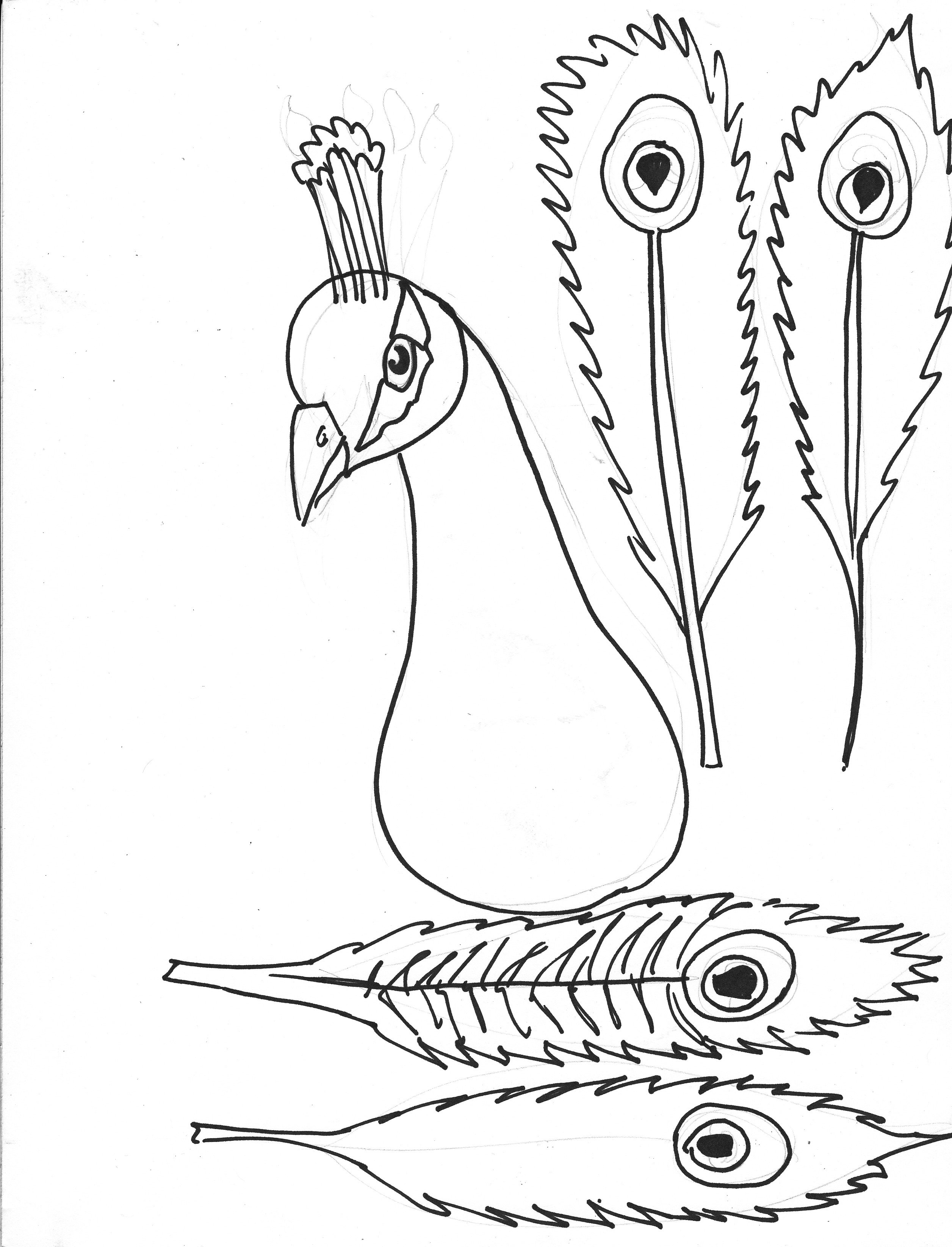Aninimal Book: Peacock Pictures Drawing at GetDrawings.com   Free for ...