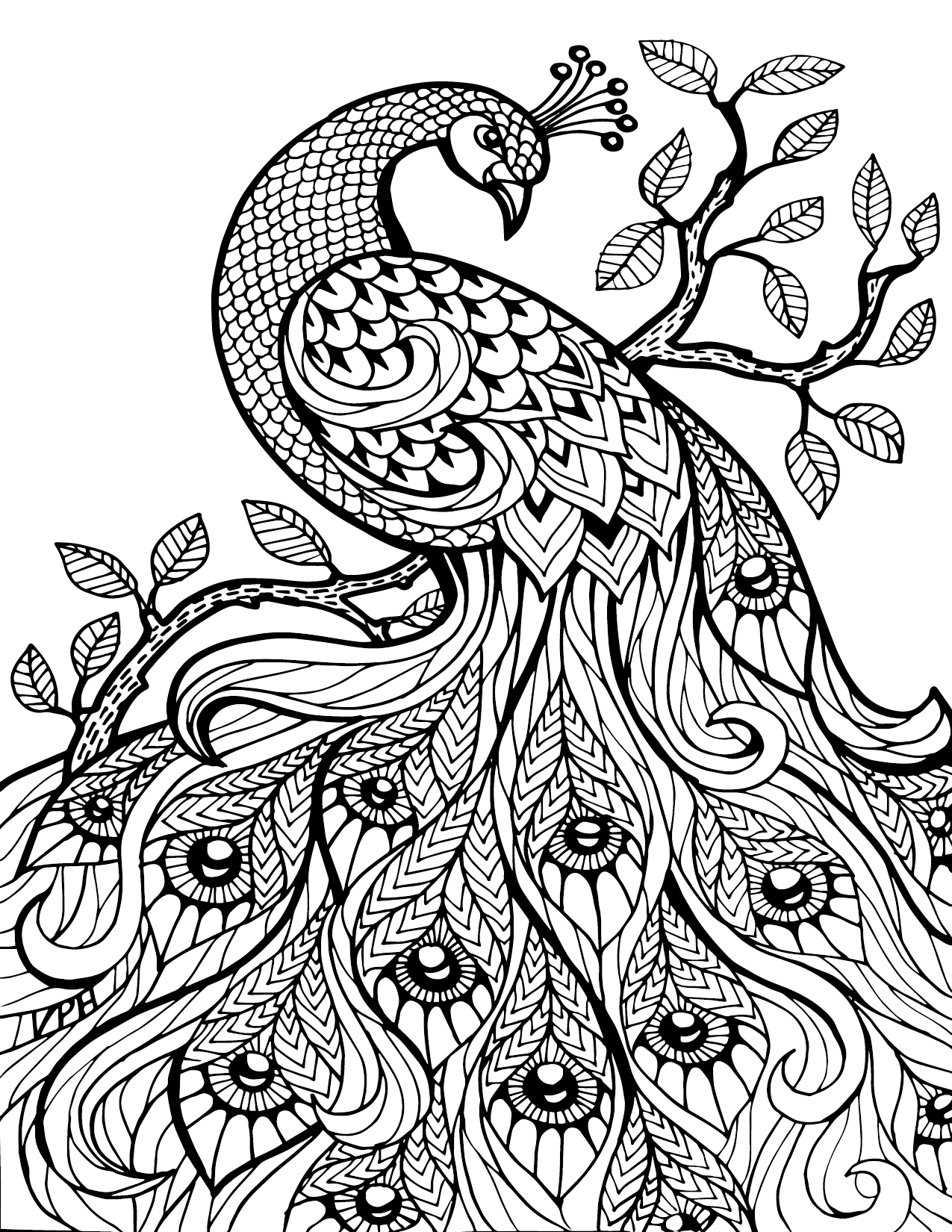 1275x1650 Adult Coloring Pages Peacock Printable For Kids