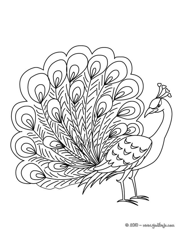 635x820 Pavo Real Dibujos Pavo Real, Embroidery Motifs