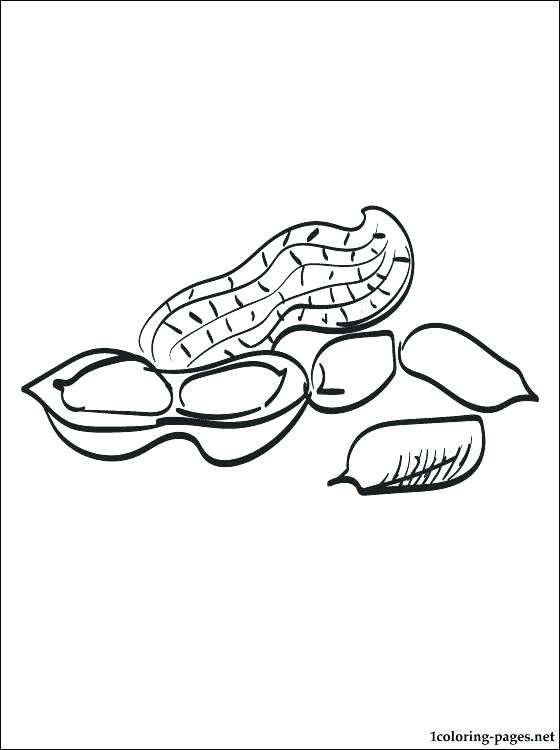560x750 Peanut Coloring Page Peanut Butter On Bread Coloring Page Free