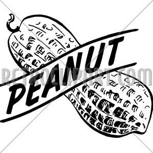 300x300 Peanut,