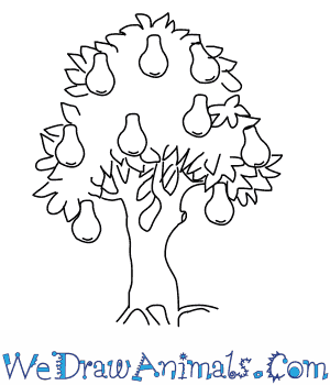 300x350 How To Draw A Pear Tree
