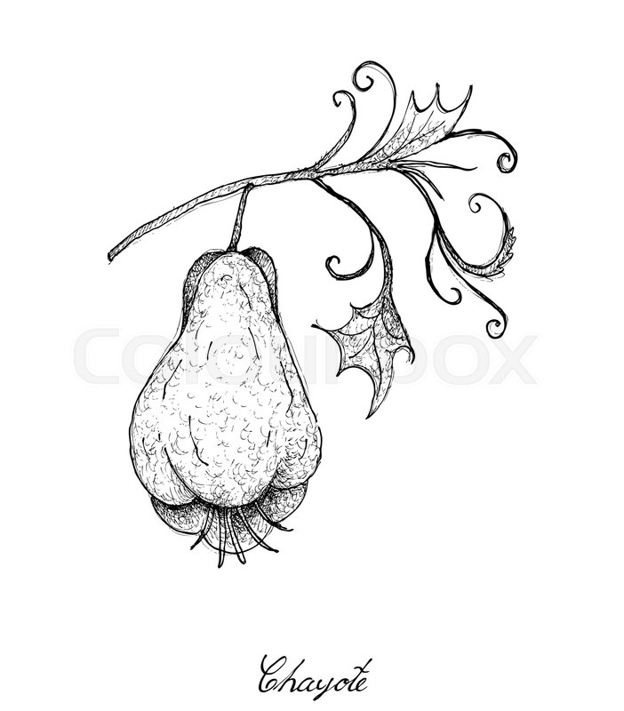 702x800 Vegetable, An Illustration Of Hand Drawn Sketch Delicious Fresh