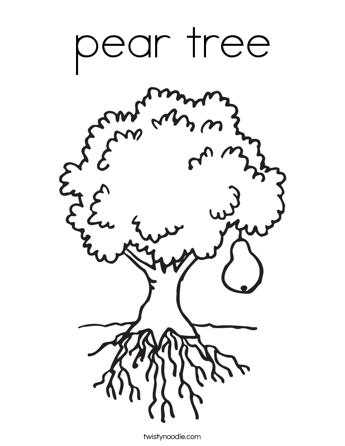 685x886 Pear Tree Coloring Page