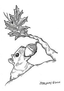 210x300 Nut Tree Drawings Fine Art America