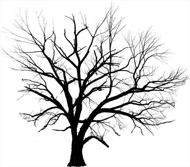 640x561 27 Best Garden, Nut Trees Images On Fruit Trees