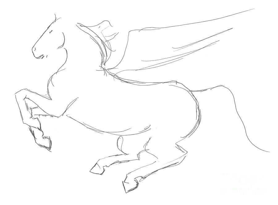900x664 Pegasus Sketch Drawing By J M Lister