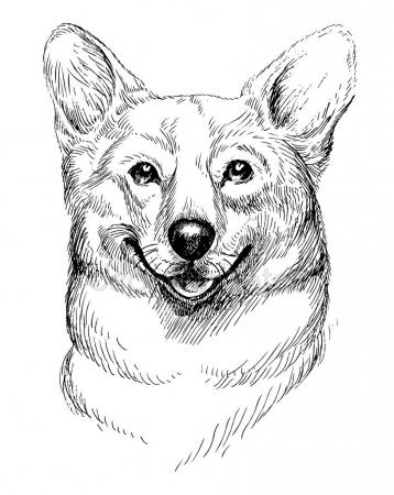 358x450 Vector Hand Drawn Sketch Portrait Of Welsh Corgi Pembroke Hand