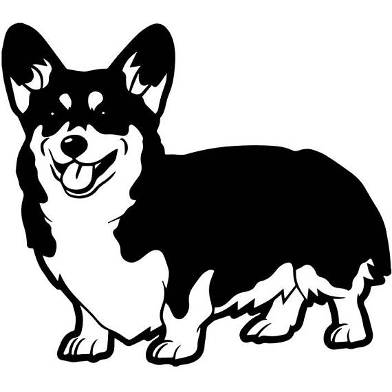 570x570 Cardigan Welsh Corgi 1 Dog Breed Canine K 9 Animal Pet Hound