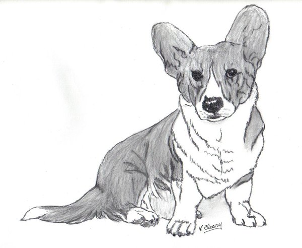 600x492 Cardigan Welsh Corgi Sitting By Gingerc