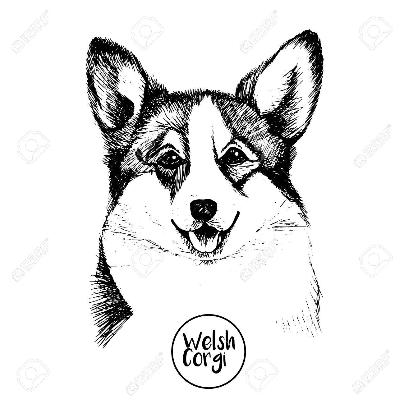 1300x1300 Close Up Portrait Of Welsh Corgi Pembroke Hand Drawn Domestic