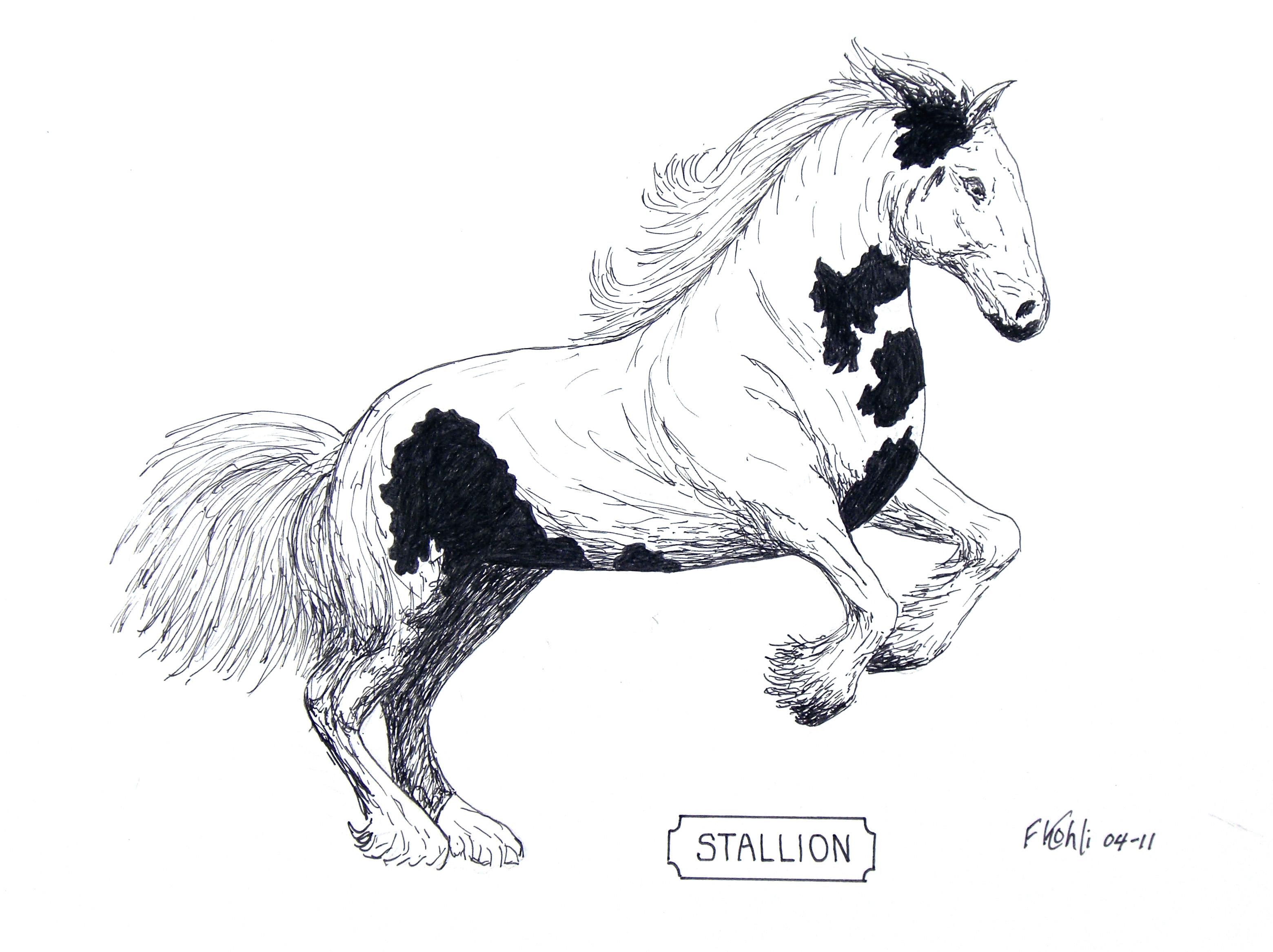 3120x2334 Stallion