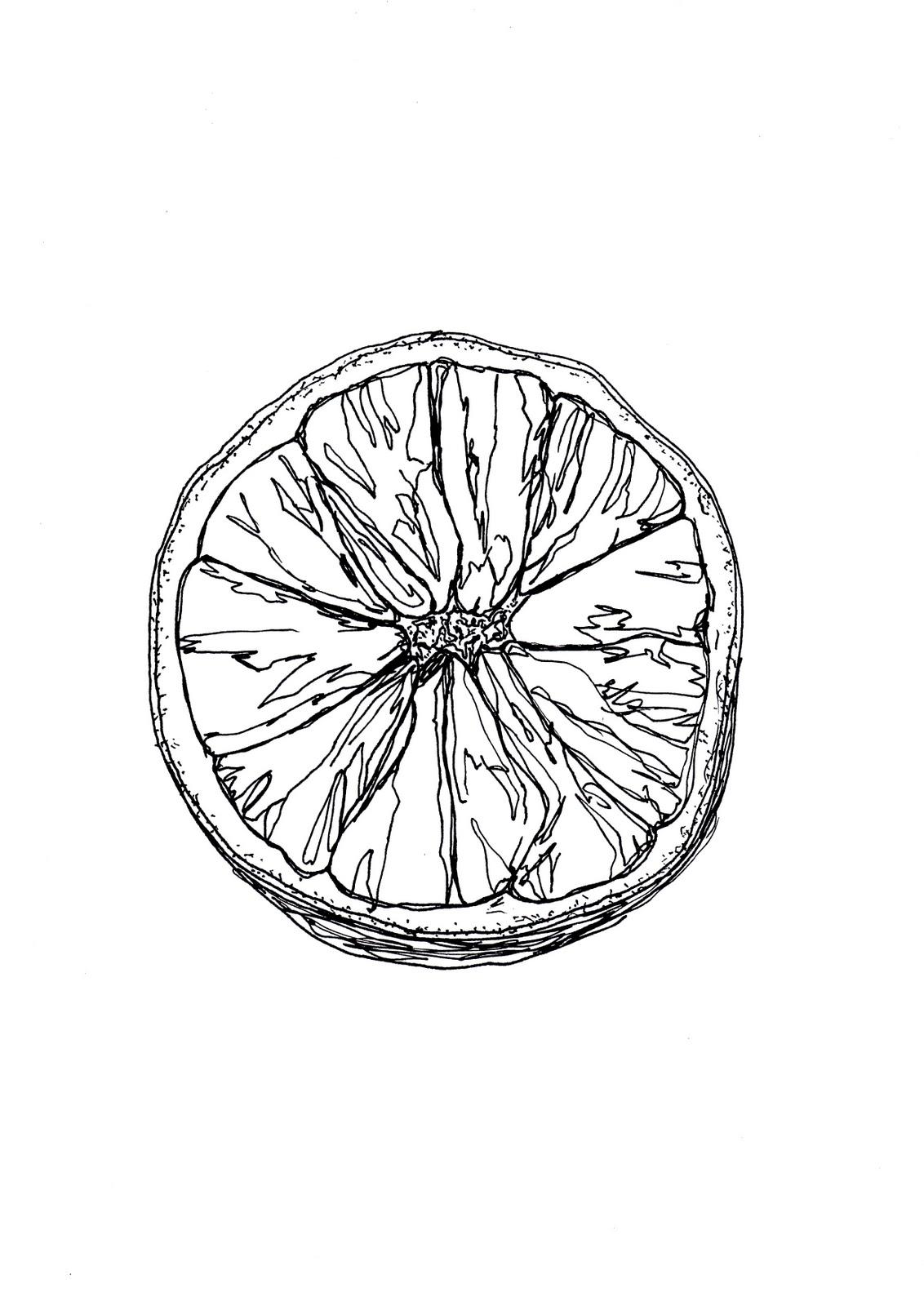 1132x1600 Detailed Observation Orange In Pen And Ink Pen, Ink, More