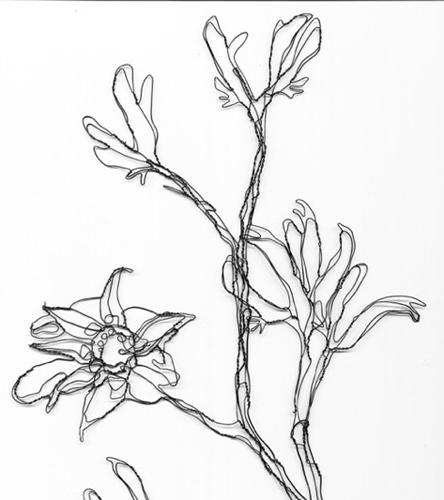444x500 Wire Botanicals Wire Sculpture And Illustration