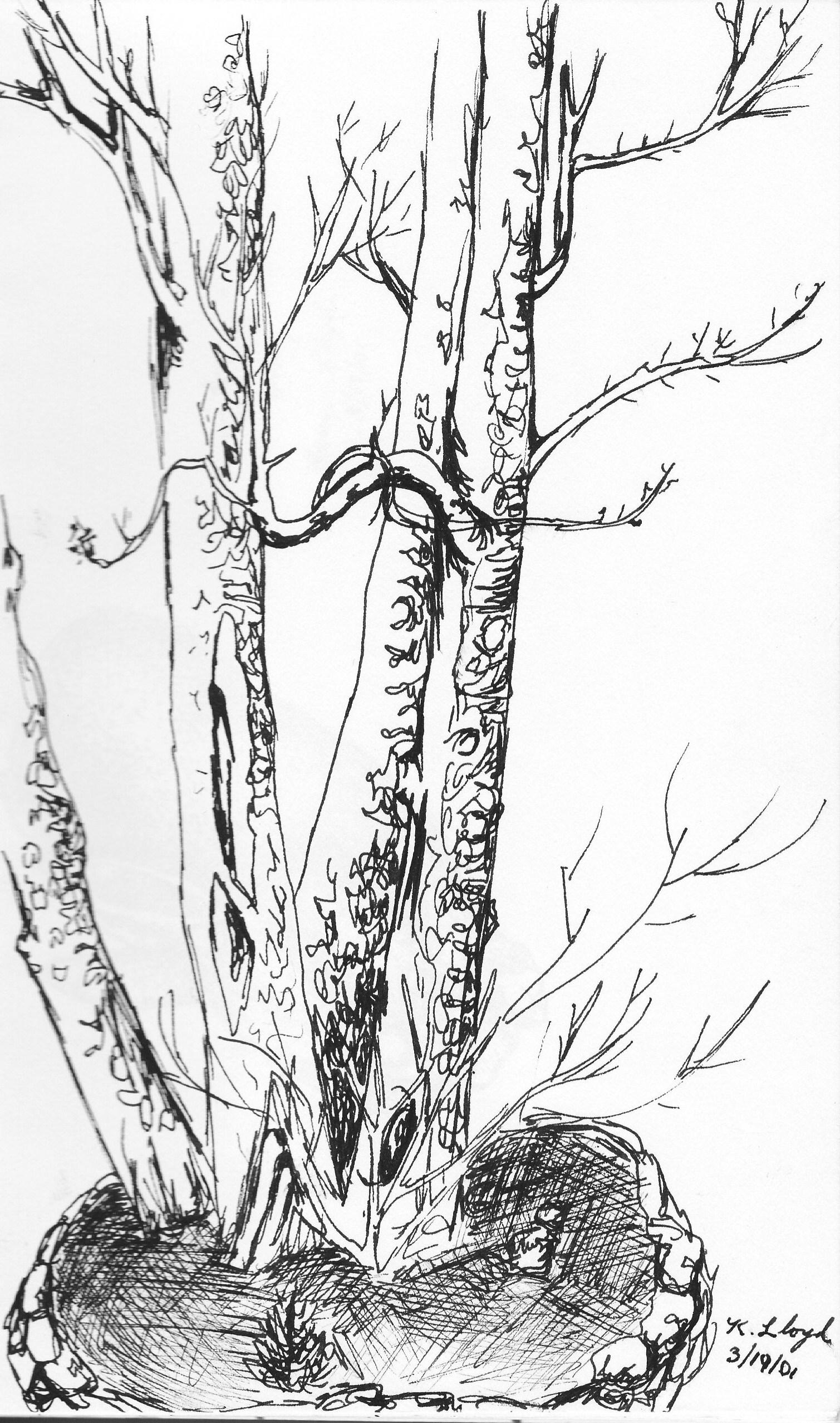 1509x2554 Mystic Tree.jpg