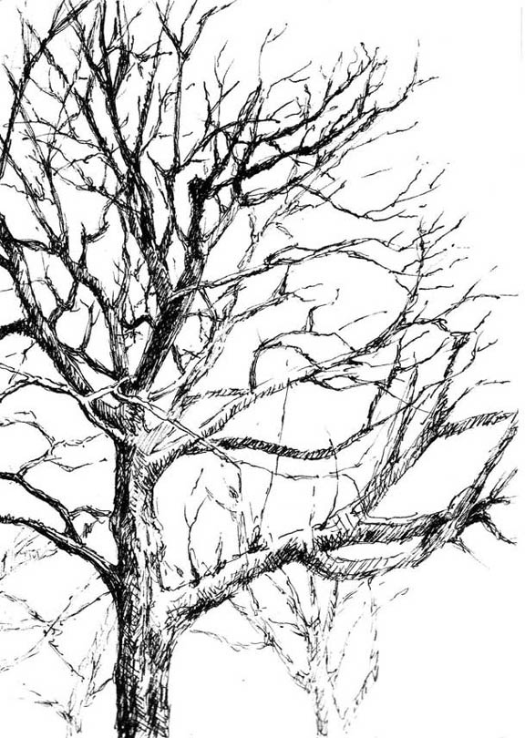 576x810 Pen And Ink Trees Pen And Ink Tree Drawings Interview, He