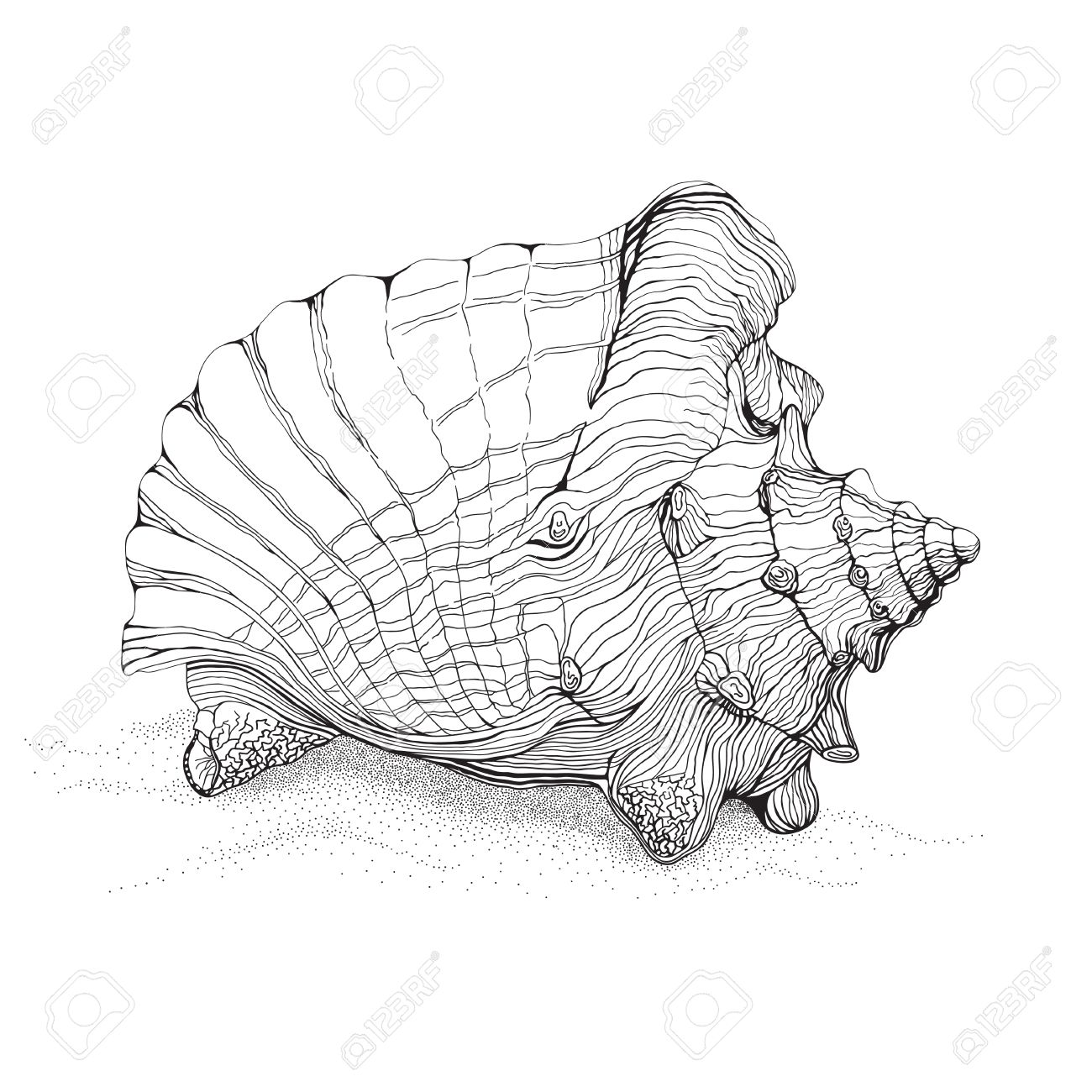 1300x1300 Decorative Pen And Ink Style Drawing Of Big Conch Shell On Sand