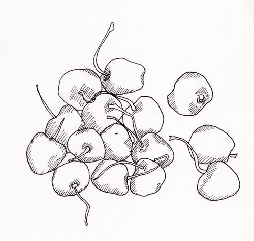 500x473 Pen, Pencil, Adding Color To Your Drawings