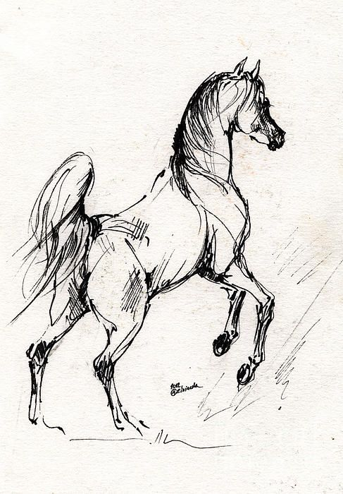 487x700 Horse Sketch 30 07 2013 Canvas Print Canvas Art By Angel