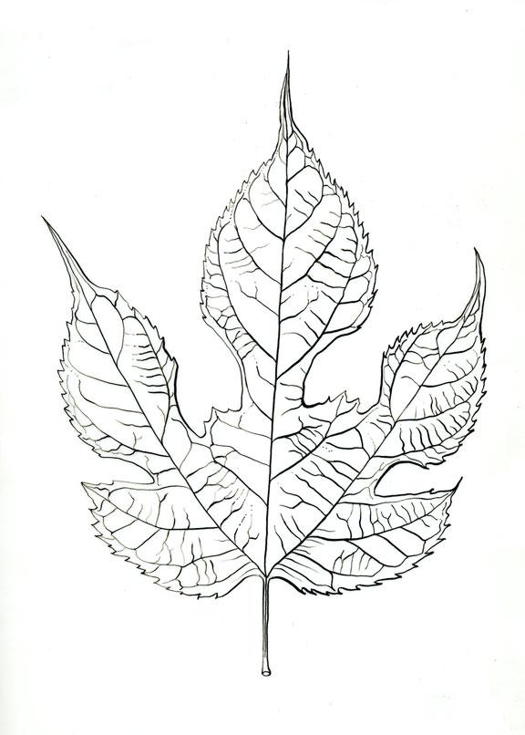 576x806 Day 25 Of Botanical Artist Mindy Lighthipe's 30 Day Botanical Leaf