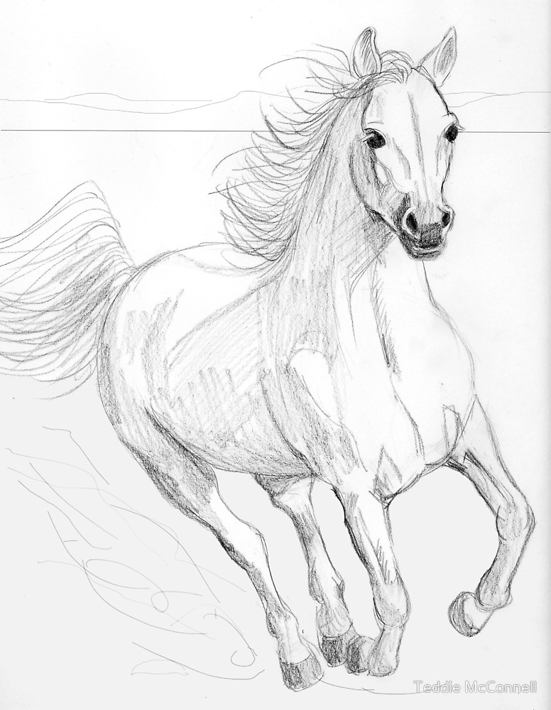 776x1000 Running Arabian Horse Pencil Drawing By Teddie Mcconnell Redbubble