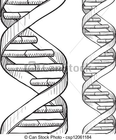 391x470 Pencil Drawing Dna Helix Dna Art Drawings, Clip