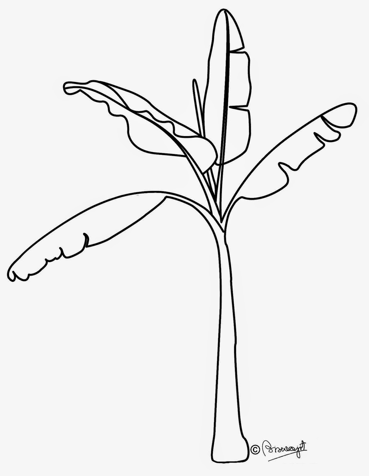 1240x1600 Banana Tree Pencil Drawing Drawing Banana Tree Clipart