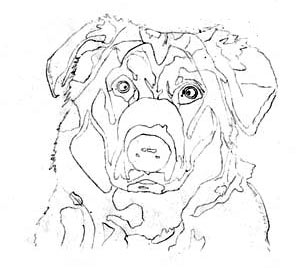 303x268 Learn How To Draw A Dog, Graphite Art Lesson