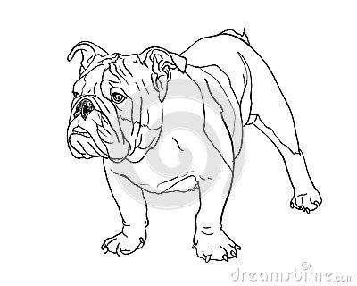 400x320 Pencil Drawing Of Bulldog Stock Photo