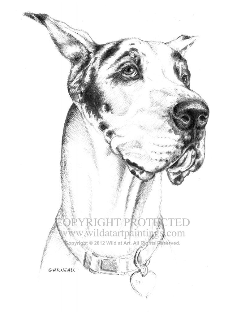 792x1008 Pet Portrait Graphite Drawings Gallery 4