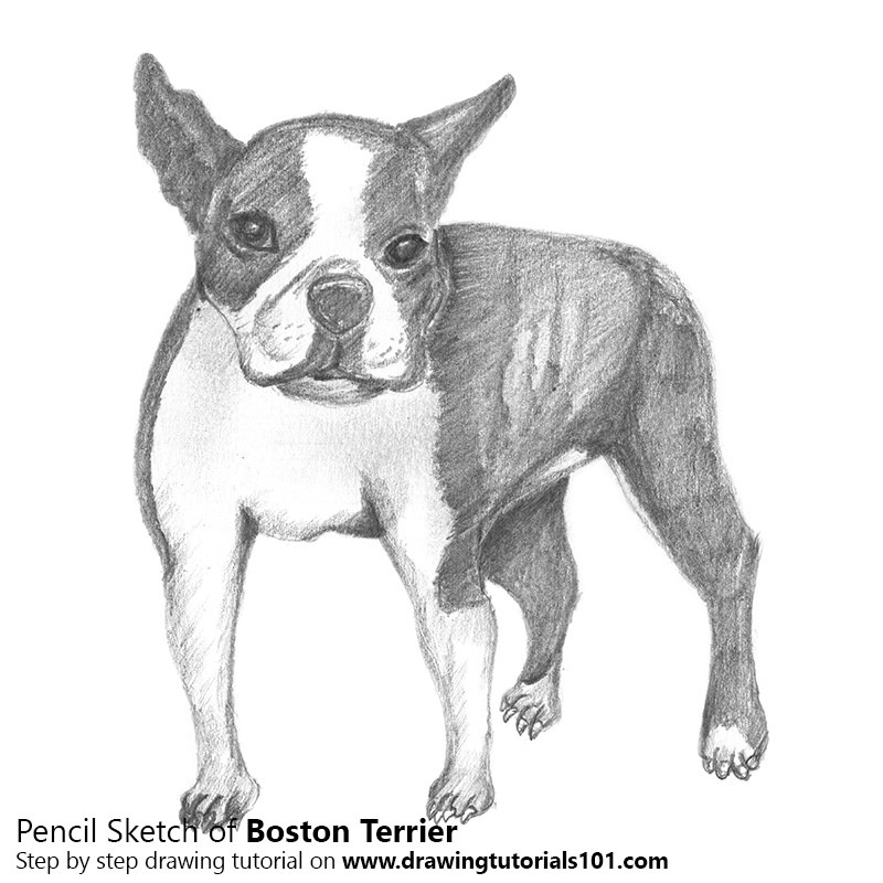 800x800 The World's Most Recently Posted Photos Of Boston And Drawing