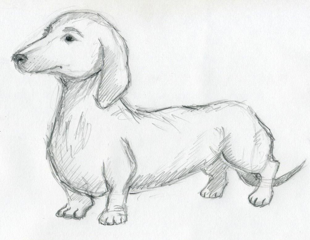 1004x777 Free Simple Drawings Of Animals Drawings I Like