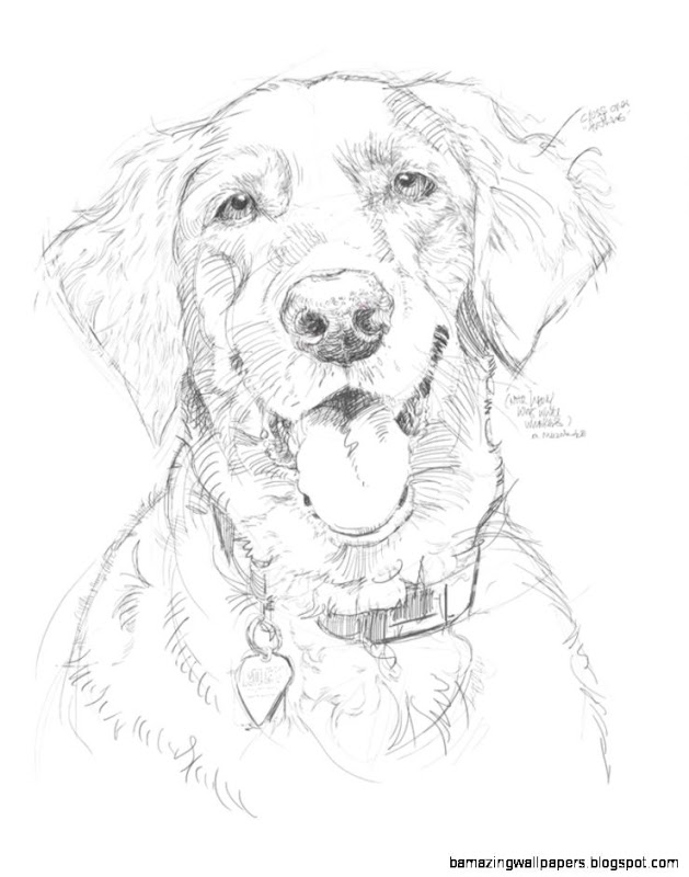 629x800 Pencil Sketch Of Dogs