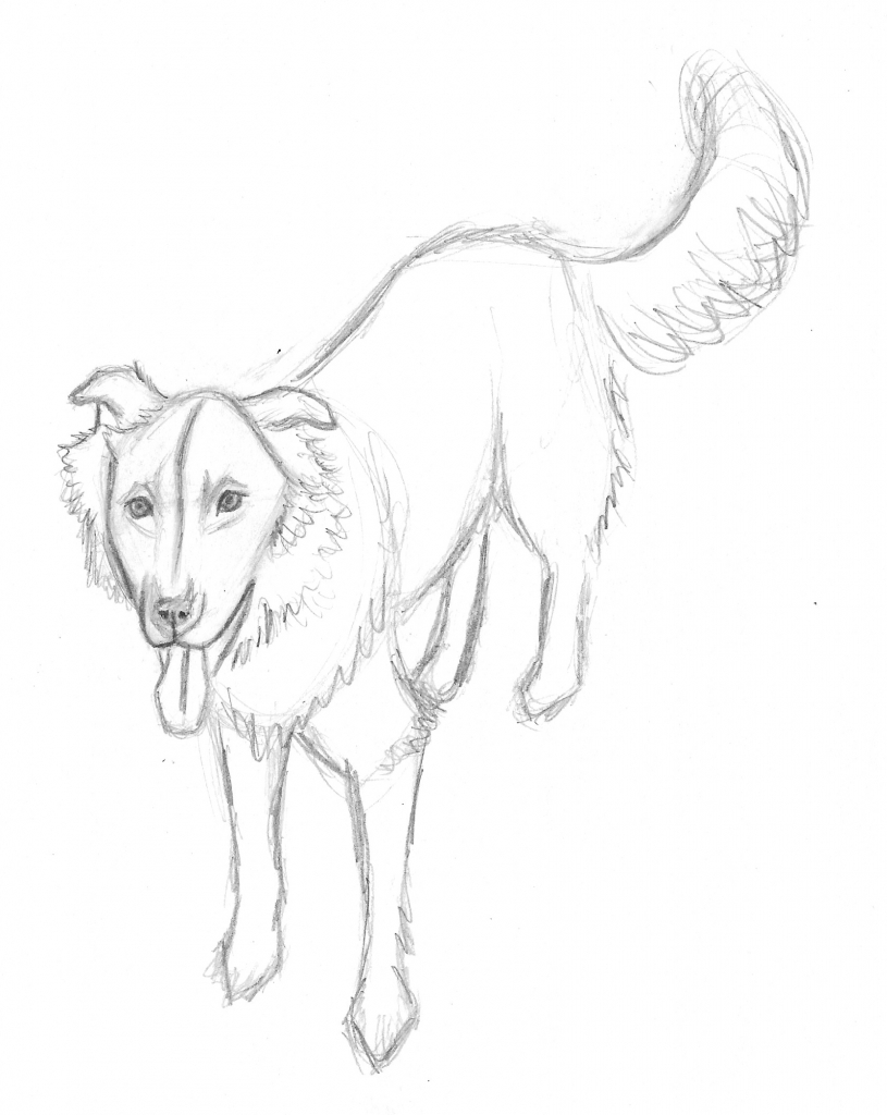 815x1024 Dog Drawings In Pencil Step By Step Dog Art American Dog Blog