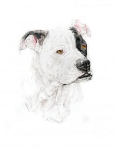 224x300 Dog Gallery Pencil Pet Portraits.