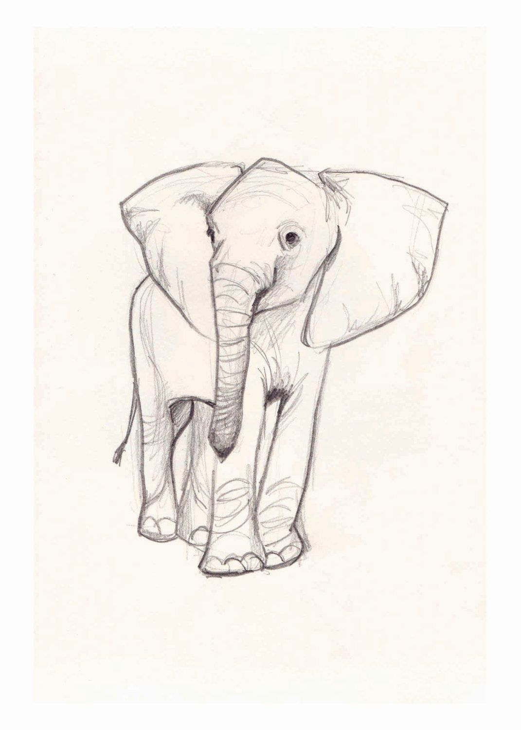 1071x1500 Elephant Sketch Art Elephant Sketch, Sketches