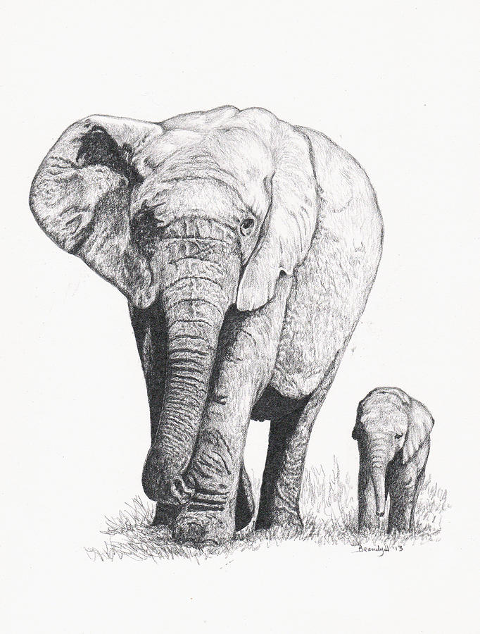 682x900 Elephant Walk Too Drawing By Brandy House