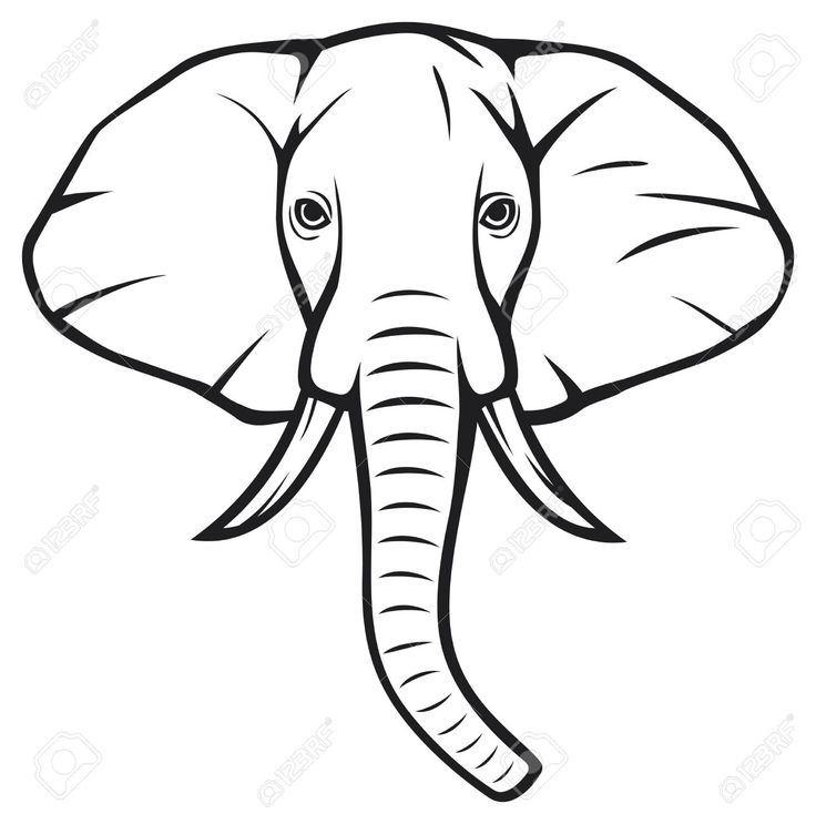 736x743 African Elephant Face Drawing Baby Elephant Drawings