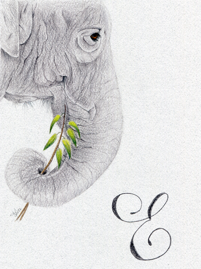 400x535 Colored Pencil Elephant