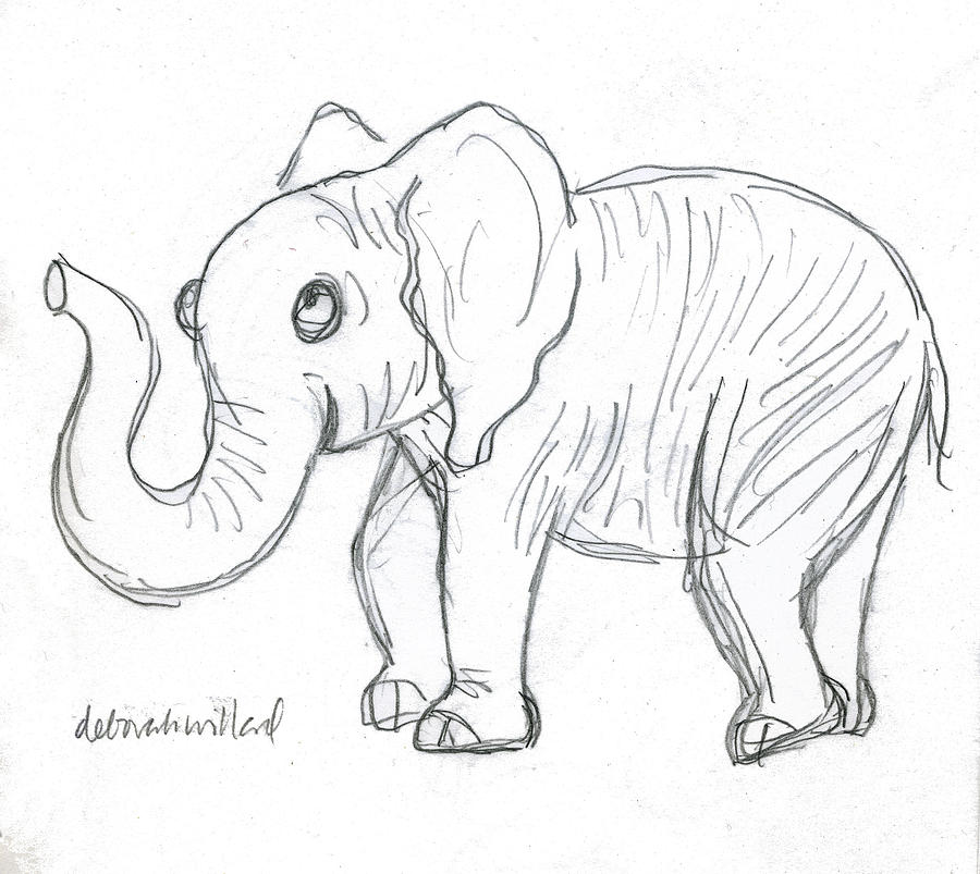 900x803 Cute Elephant Drawing By Deborah Willard