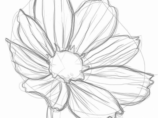 640x480 Some Drawings Of Flowers Drawing Flowers For Beginners Step Step