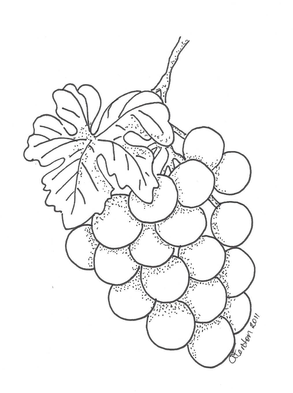 Pencil Drawing Grapes