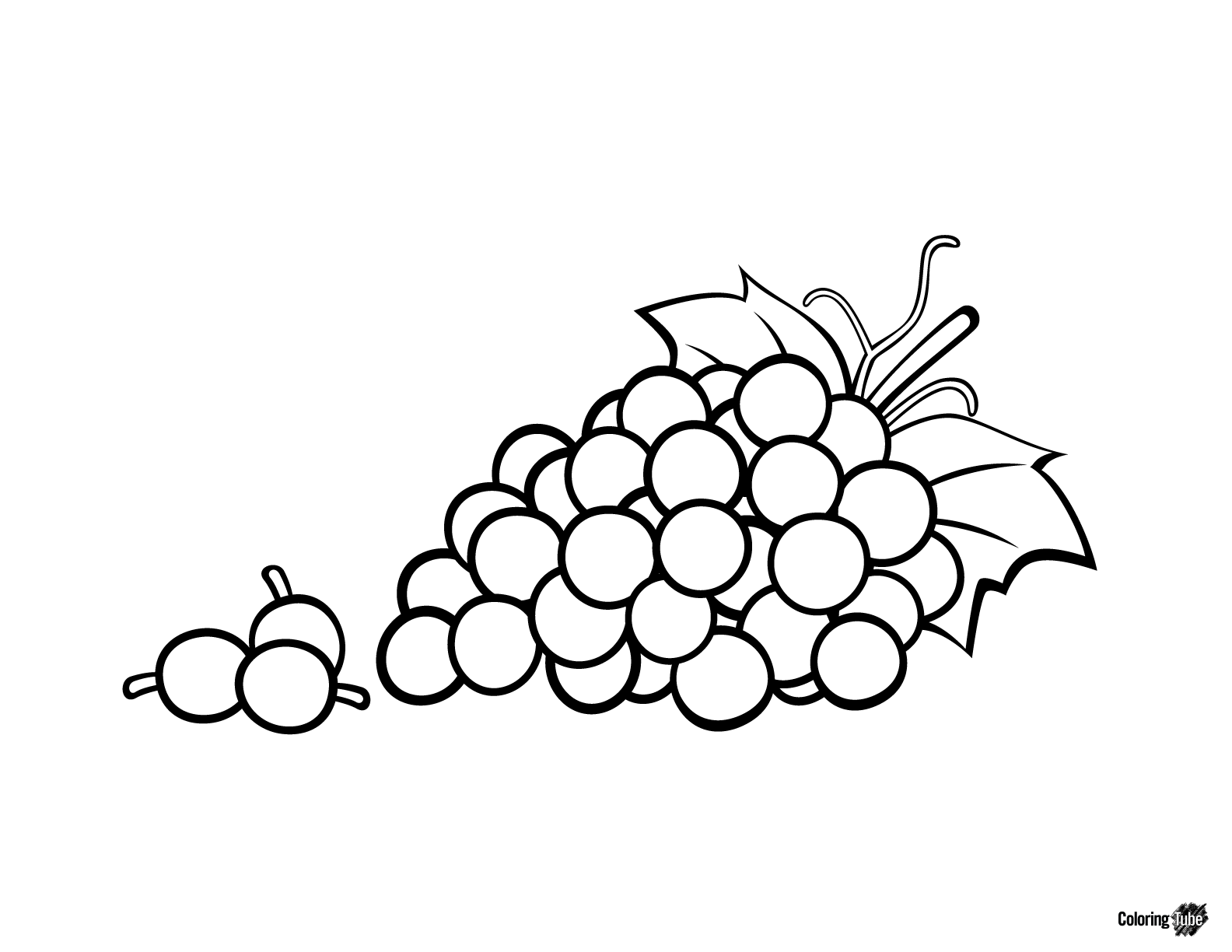 Pencil Drawing Grapes at GetDrawings.com | Free for personal use ...